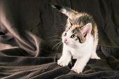 Portrait Of White Kitten With Black And Red Spots On Brown Carpet poster