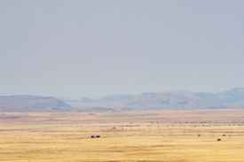 pic of open grazing area  - landscape of a dry area in south africa - JPG