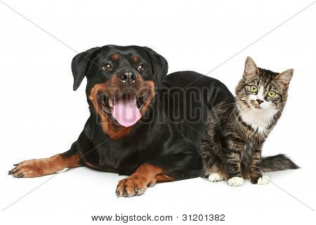 Rottweiler And Cat Lies On A White Background