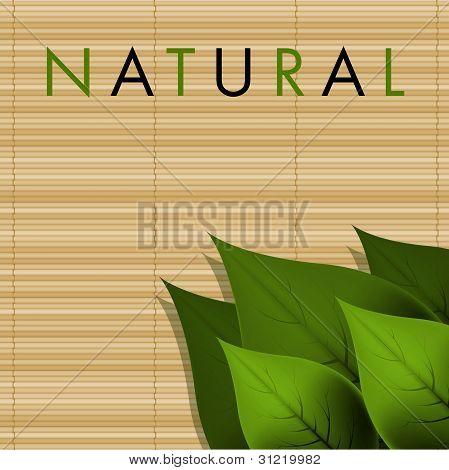 Vector Natural Design