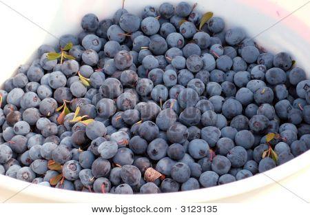 Alaskanblueberries