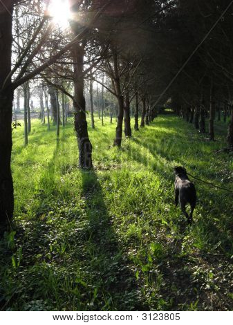 Run Through The Woods
