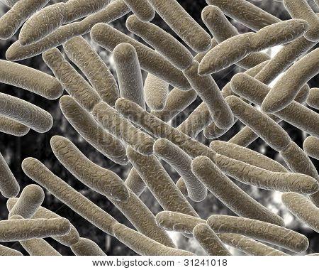 Bacillus on blurred background.
