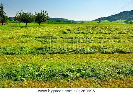 Mown Fields