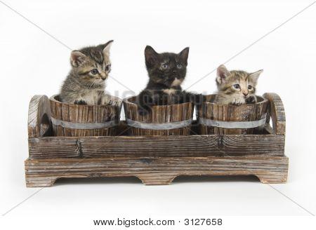 Tres gatitos en macetas