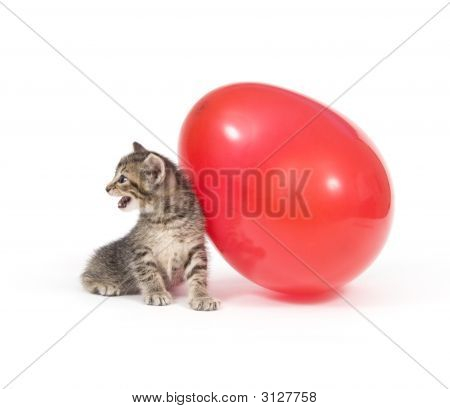 Kitten And Red Balloon