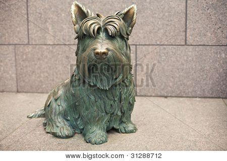 Dog at Roosevelt National Memorial