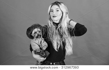 poster of Girl Hug Little Dog In Coat. Woman Carry Yorkshire Terrier. Make Sure Dog Feel Comfortable In Clothe