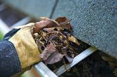 image of gutter  - A fall tradition  - JPG