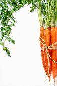 Постер, плакат: Морковь