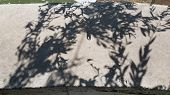 Shadows From Willow Tree Leaves On Cement Border Surface. Blur Spotted Shadows On Weathered Wall Bac poster
