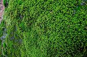 Moss Texture. Moss Background. Green Moss On Grunge Texture, Background poster