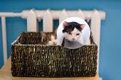 Black-white Cat With Plastic Medical Collar And White Tabby Cat Sitting In Cat Bed Near To Heater. poster