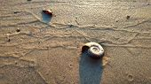 River clam shell on the wet  river sand background. The landscape of riverbank and beach under the h poster
