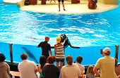Tenerife Island, Spain - May 26: The Sea Lions  Show In Loro Parque On May 26, 2011 In Tenerife, Spa