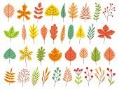 Autumn Leaves. Yellow Autumnal Garden Leaf, Red Fall Leaf And Fallen Dry Leaves. Botanical Forest Pl poster