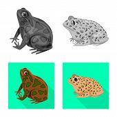 Vector Design Of Wildlife And Bog Sign. Set Of Wildlife And Reptile Stock Symbol For Web. poster
