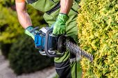 Shaping Garden Trees With Powerful Gasoline Hedge Trimmer Equipment. Gardener With Power Tool. poster