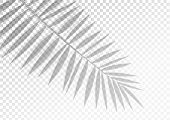 The Transparent Shadow Overlay Effect. Tropic Leaf. Mockup With Overlay A Palm Leaf Shadow. Natural  poster
