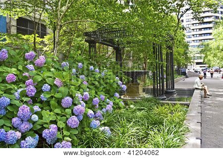 Nature In New York City