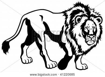 lion black white image
