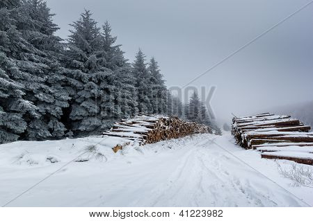 Snow Covered Logs And Fur Trees