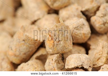Wood Pellet (pine) Cat Litter Close-up
