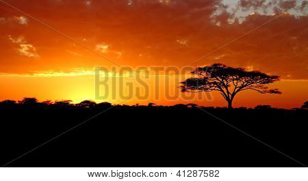Blazing African Sunset