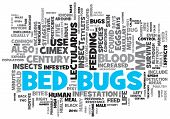 picture of parasite  - Bed Bugs Concept Design Word Cloud on White Background - JPG