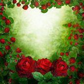image of rosa  - beautiful red roses background - JPG