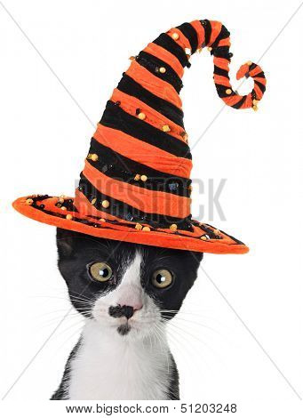Cross eyed kitten wearing a Halloween witch hat.