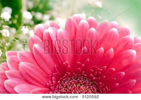 Pink Gerbera Daisy  & Baby´s-breath