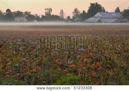 Farmland Morning Mist, Richmond, BC