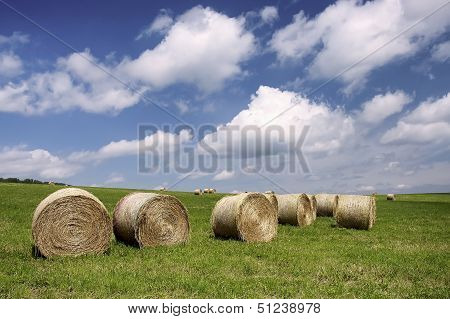 Silage In The Meadow