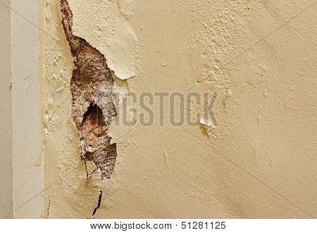 Dry Rot In Interior Wall