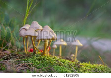 Group Nitrous bonnet in the forest