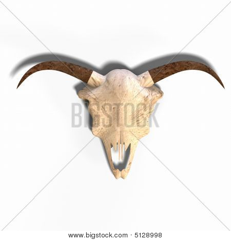 Skull Of A Dead Animal