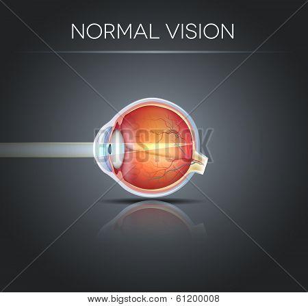 Human Normal Eye Vision