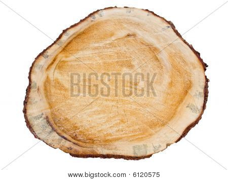 Cross Section Of Pine Tree