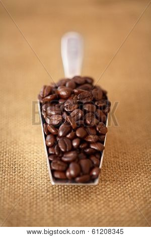 Bulk Scoop of Coffee Beans