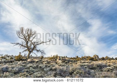 silhouette of a dead tree against field of sagebrush and rocks in North Park, Colorado