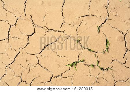 Cracks in ground with small green plants sprouting up