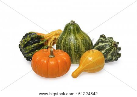 Squash and pumpkin on white