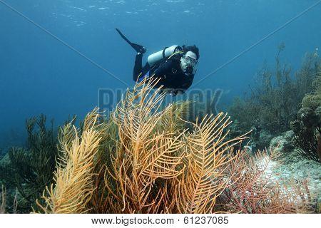 Scuba Diver And Forest Of Gorgonians - Bonaire