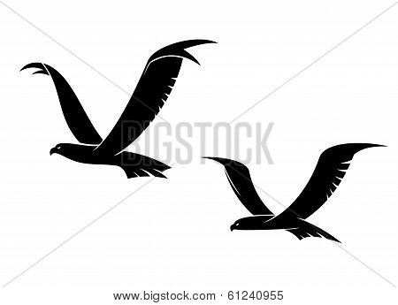Two flying birds in silhouette