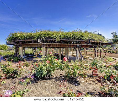 Rose Garden In San Diego Arcitectural Structure.