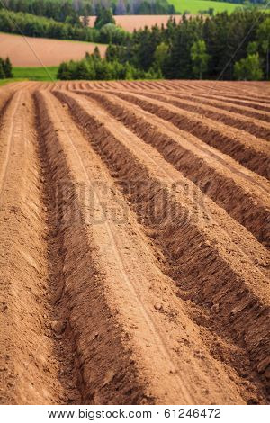 Rows and furrows in a newly planted potato field on Prince Edward Island.  Shallow depth of field.