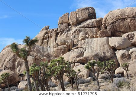 Joshua Tree National Park Desert Landscape