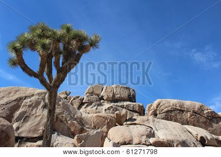 Joshua Tree National Park Landscape
