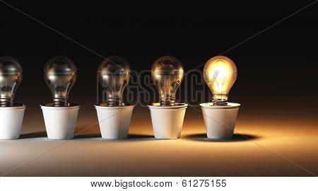 Row Of Light Bulbs In Vases
